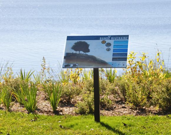 Rives de qualite pour un lac en sante lac des deux montagnes