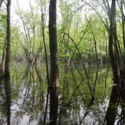 Les OBV et les MRC de la région des Laurentides se mobilisent pour la protection des milieux humides et hydriques